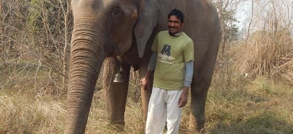 Raju the elephant
