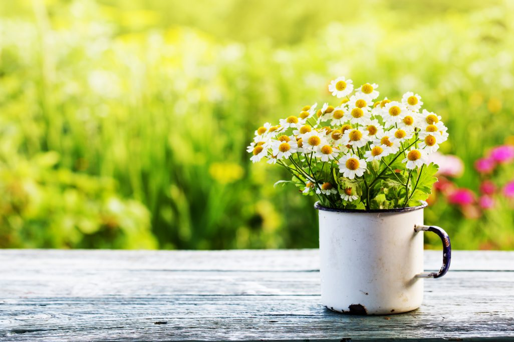 3 Essential Spring Campaign Follow-Up Steps
