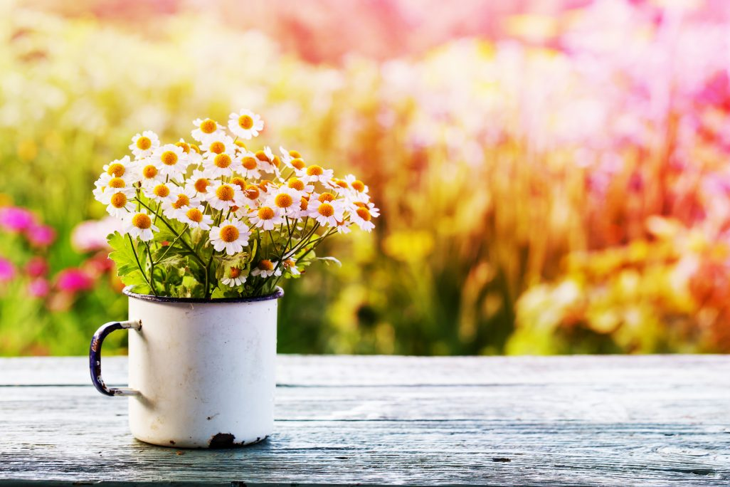 5 Tips to Make Your Spring Campaign Blossom